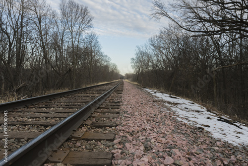 Train tracks in a dead forest during late winter