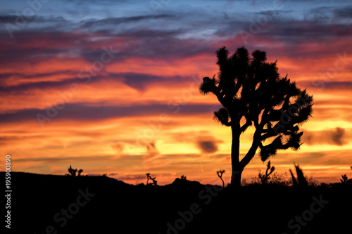 Foto op Plexiglas Crimson The morning sky erupts in color over Palm Springs, California just before sunrise.