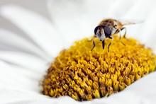 Pollination In Springtime