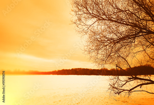 Fotobehang Zwavel geel Right aligned tree with evening bokeh landscape background