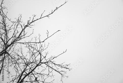 Fotografía  Left aligned tree branches empty background