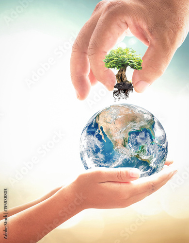 Fotografía  World environment day concept: Two human hands holding earth globe and big tree over blurred nature background