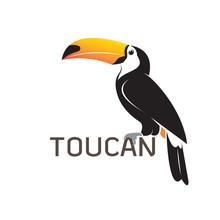 Vector Of Toucan Birb Design. ...