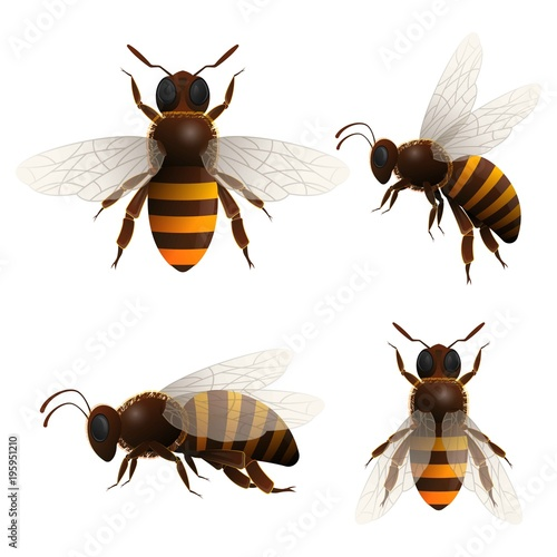 Honeybee isolated set on white background Canvas Print