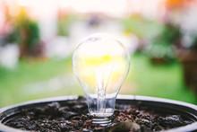 Energy Saving Light Bulb Light Bulb Growing In Soil Concept.