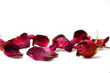 Dry Petal Of Rose Isolated On White Background