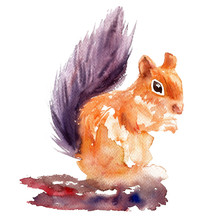 Cute Watercolor Squirrel Sitti...