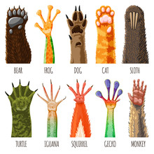 Animal Paw Vector Animalistic Pets Claw Or Hand Of Cat Or Dog And Pawed Bear Or Monkey Foot Illustration Pawky Mammals Hello Set Isolated On White Background