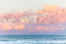 Seagulls Flying At The Beach During Sunset In Australia