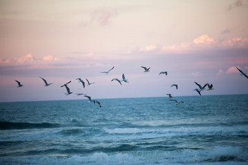 Fototapeta Morze seagulls flying st the beach