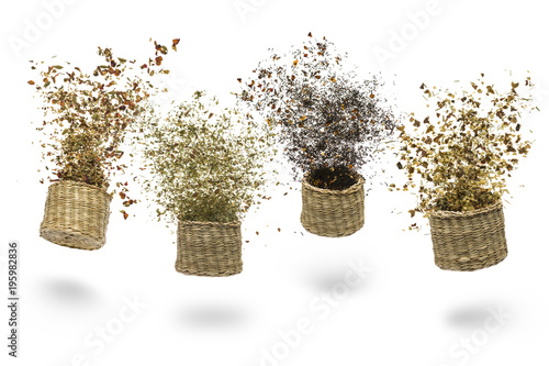 straw baskets with variety of tea blend flying on white background Wallpaper Mural