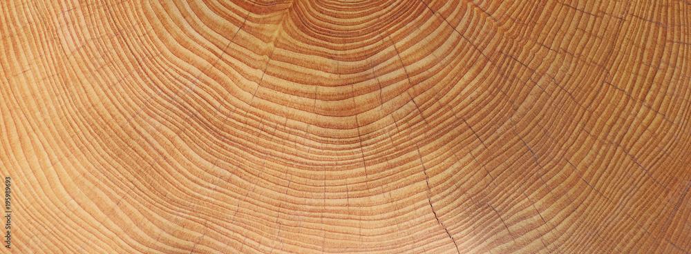 Fototapety, obrazy: Holz - Jahresringe - Hintergrund