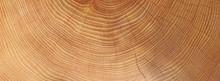 Holz - Jahresringe - Hintergrund