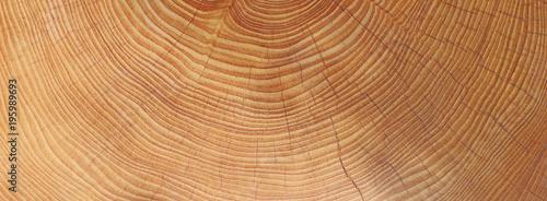 Obraz Holz - Jahresringe - Hintergrund - fototapety do salonu