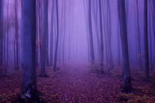 Fantasy Forest Abstract Backgr...
