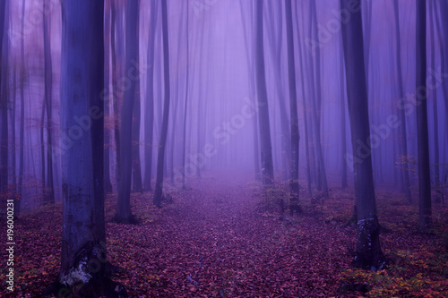 Fotobehang Snoeien Fantasy forest abstract background, ultra violet concept - color of the year 2018