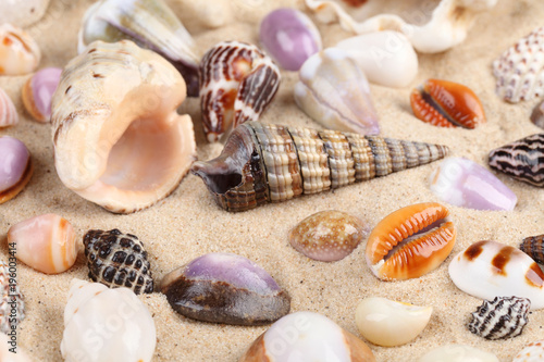 Beautiful shells in sand