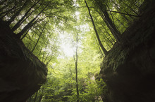 Trees On Canyon Cliffs In Gree...