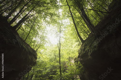 Stampa su Tela trees on canyon cliffs in green forest, natural symmetrical landscape