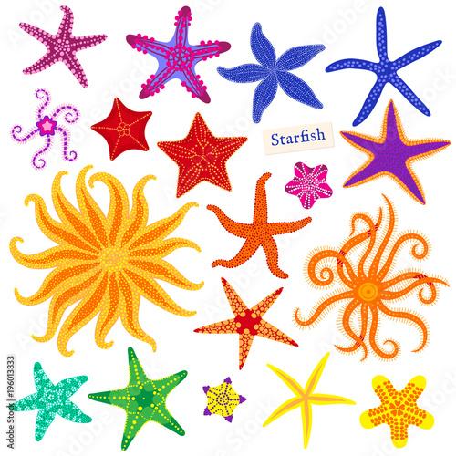 Sea stars set Canvas Print