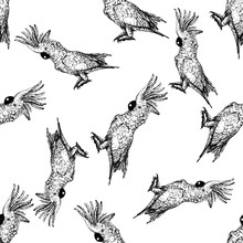 Seamless Pattern Of Hand Drawn Sketch Style Cockatoo Parrot. Vector Illustration Isolated On White Background.