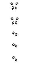 Marten Tracks. Typical Footpri...