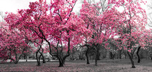 Forest Fantasy Landscape With Pink Trees In A Black And White