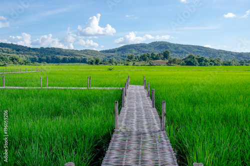 Deurstickers Groene bamboo bridge in green rice field with the view of mountain and blue sky in background
