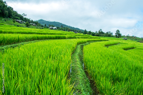 Poster Rijstvelden Green Rice Field Terraced with clouds in Chiangmai, Thailand