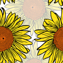 Large Yellow Blossoming Sunflowers