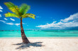 Palm tree and tropical island beach in Dominican Republic