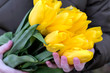 Bouquet of yellow tulips in female hands, spring, love.