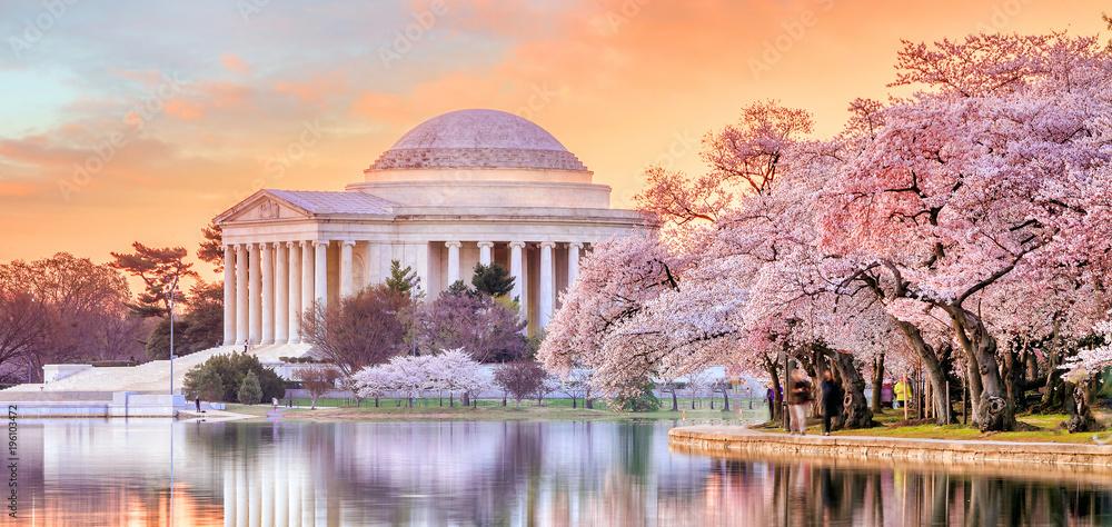 Fototapety, obrazy: Jefferson Memorial during the Cherry Blossom Festival
