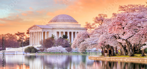 Foto op Plexiglas Amerikaanse Plekken Jefferson Memorial during the Cherry Blossom Festival