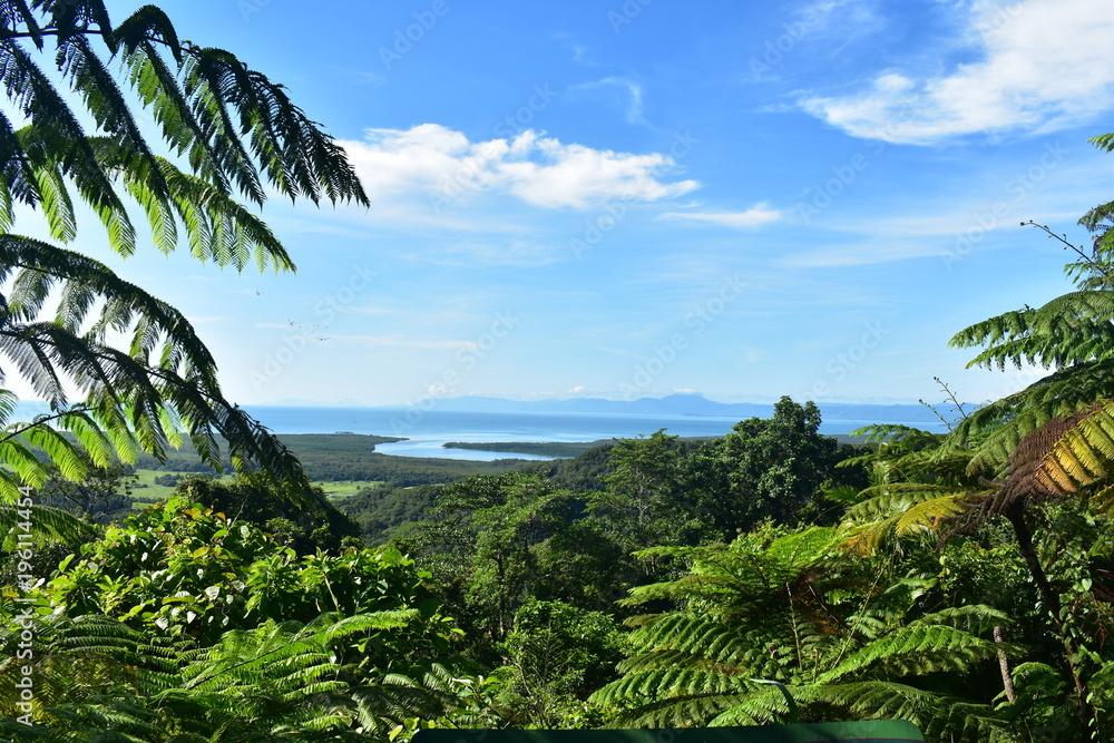 Fototapeta Daintree rainforest