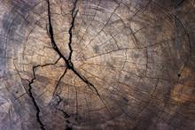 Wood Tree Stump Texture Backgr...