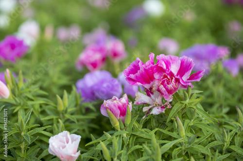 In de dag Bloemen Colorful Flowers