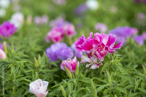 Staande foto Bloemen Colorful Flowers