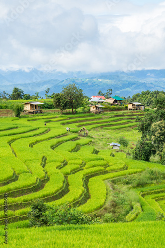 Tuinposter Lime groen Agriculture village of rice on terrace hill, Pa Bong Piang, Chiang Mai, Thailand