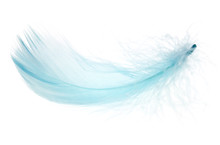Beautiful Blue Feather On Whit...