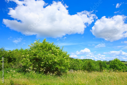 Big green bushes and blue sky with clouds. Fototapete