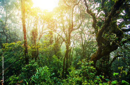 Photo Amazing jungle trail with thick green trees and branches in Mossy Forest, Malays