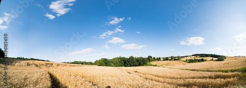 Fototapeta Panorama of an autumn field with ripe wheat obraz
