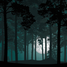 Vector Illustration Of A Deep Coniferous Forest Under A Night Sky