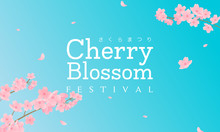 Cherry Blossom Festival (In Japanese Character) Vector Illustration. Sakura Branch With Petals Falling And Blue Sky Background.