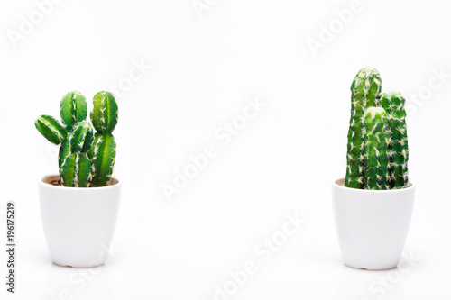 Deurstickers Cactus Small decorative cactus in vase isolated on neutral background.