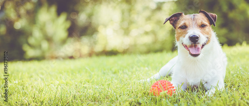 Spoed Foto op Canvas Hond Pet dog lying on grass at sunny summer day (panoramic crop)