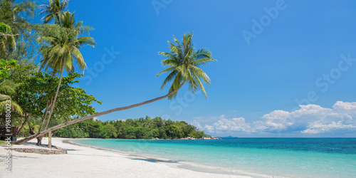 Tropical beach panorama with a leaning palm tree, Bintan island near Singapore, Canvas Print