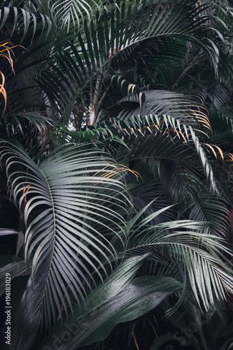tropikalne-liscie