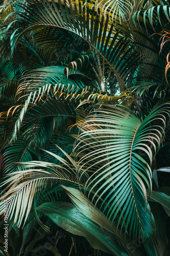 Obraz Deep dark green palm leaves pattern. Vertical, creative layout - fototapety do salonu